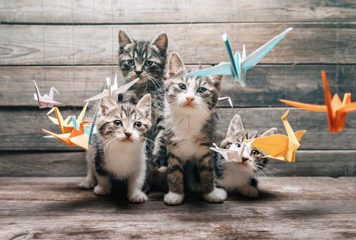 折り鶴と4匹の仔猫
