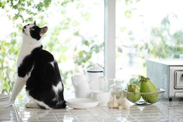 仕切りのない明るいキッチンと白黒猫