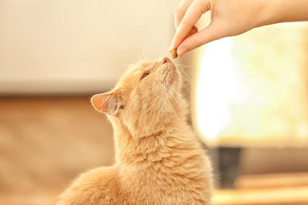 歯磨きガムを見ている猫