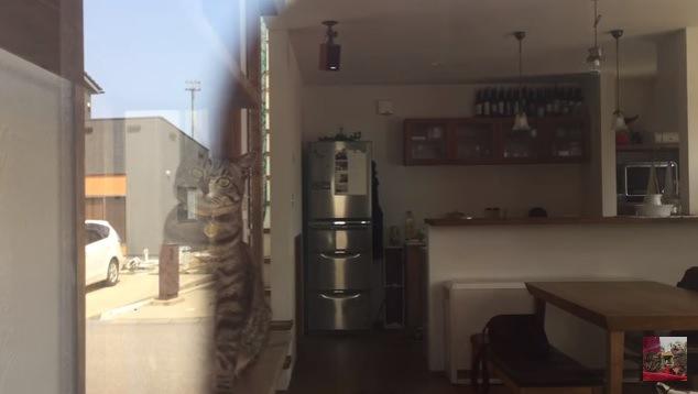 座って窓越しにこちらを見ている猫