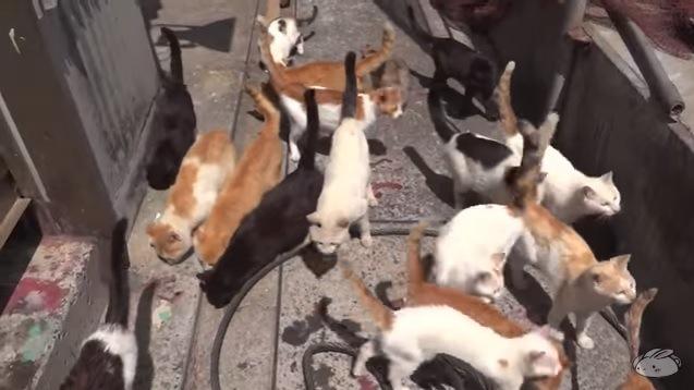 たくさんの猫(中央辺りに白い猫)