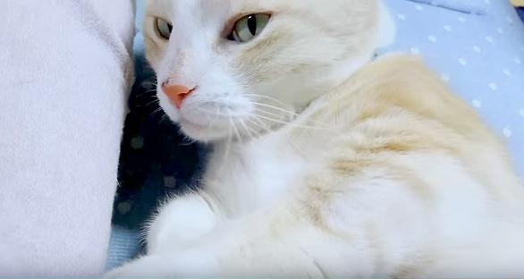 目が覚めてこちらを見る猫