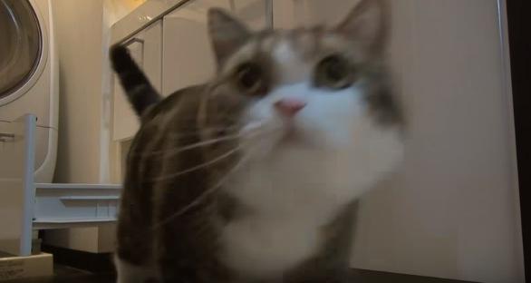ドヤ顔の猫