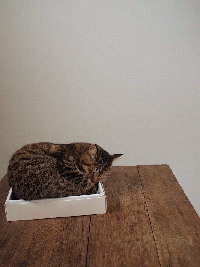 小さな箱に無理やり入って眠る猫