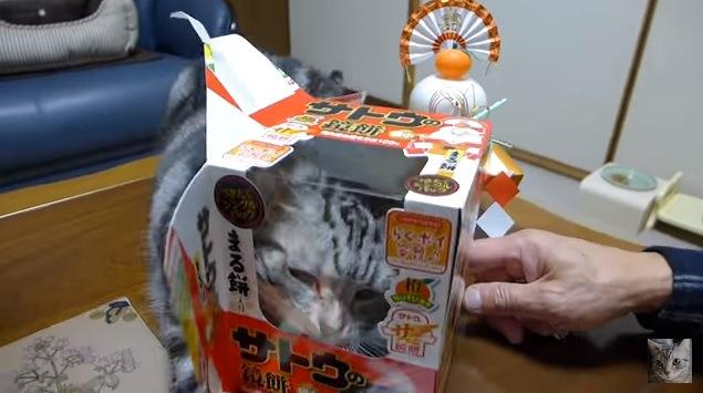箱にじゃれる猫