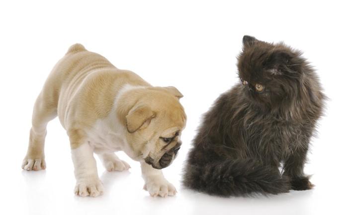 犬にお尻を嗅がれる猫