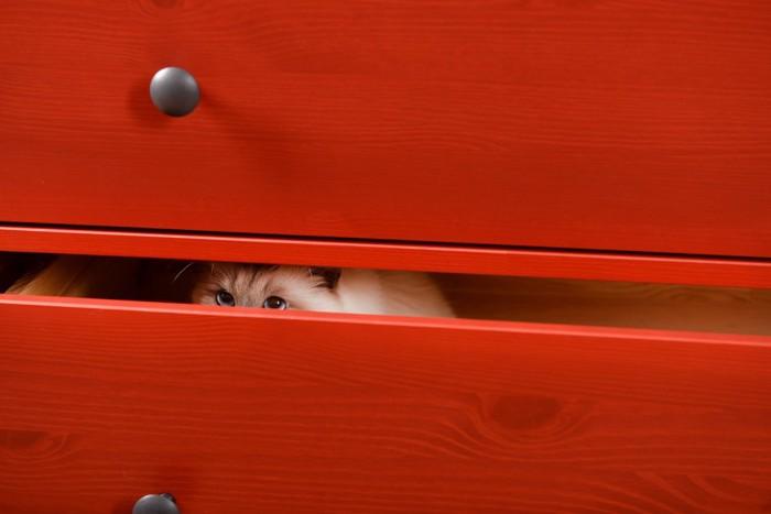 引き出しに隠れている長毛の猫