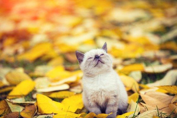 落ち葉と猫