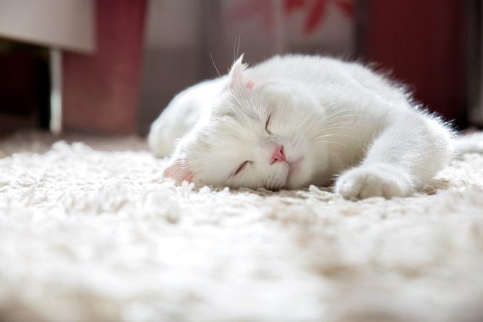 カーペットの上で眠る白猫