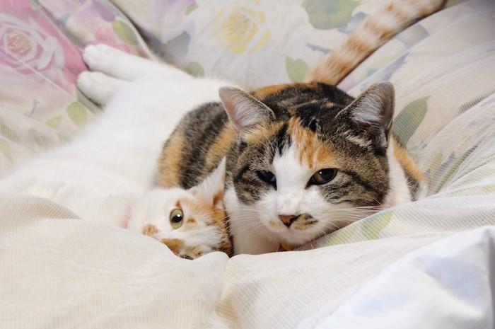 布団の上で眠る母猫と子猫