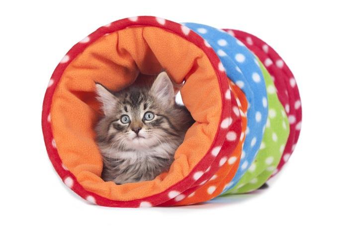 カラフルなトンネルに入る猫