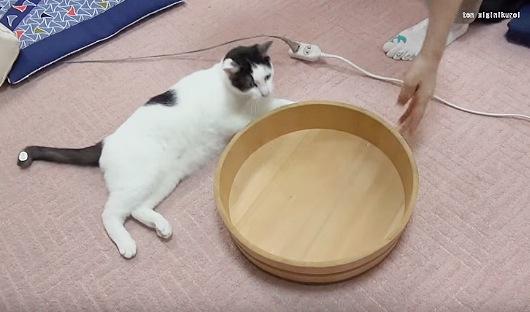 桶を見つめる猫