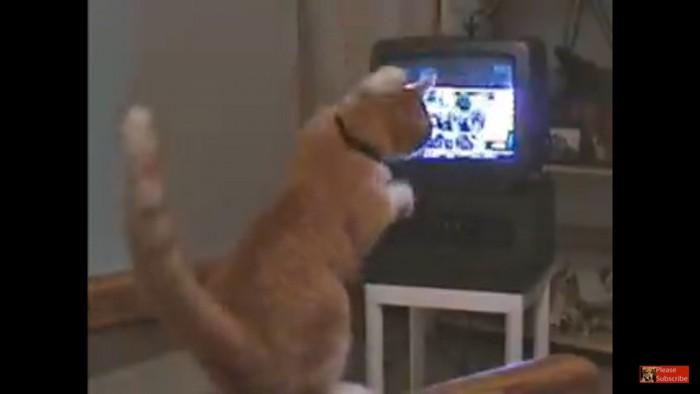 頭を指示する猫