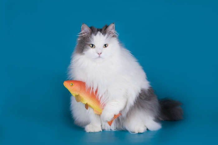 魚のおもちゃと猫