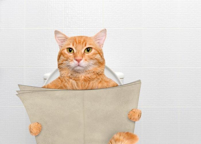 活字を読む猫