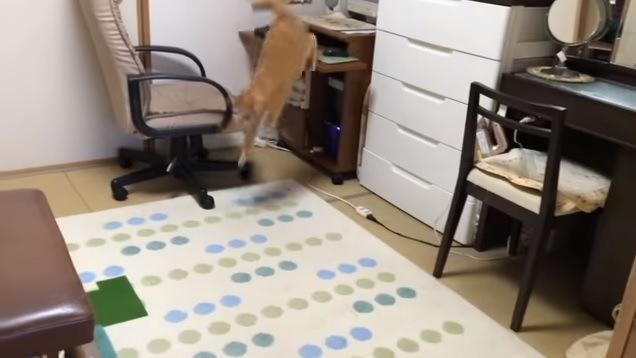 デスクから飛び降りる猫