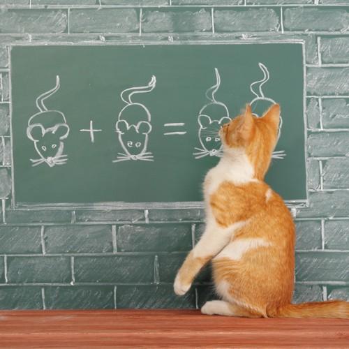 ねずみを書いた黒板と猫