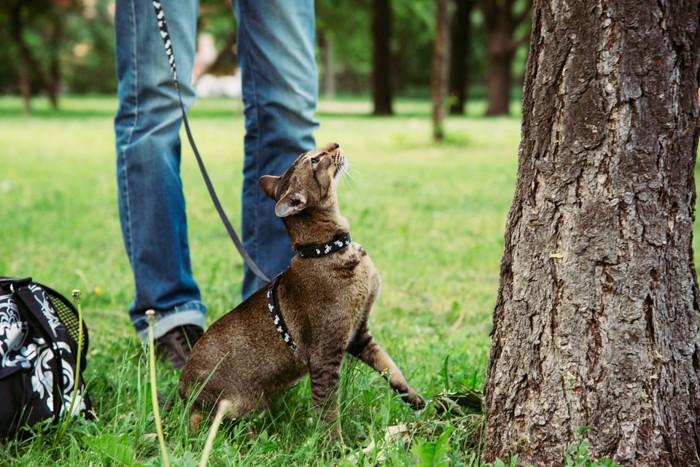 木に上りたい猫