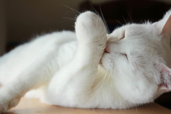 知覚過敏な毛づくろいをしている猫