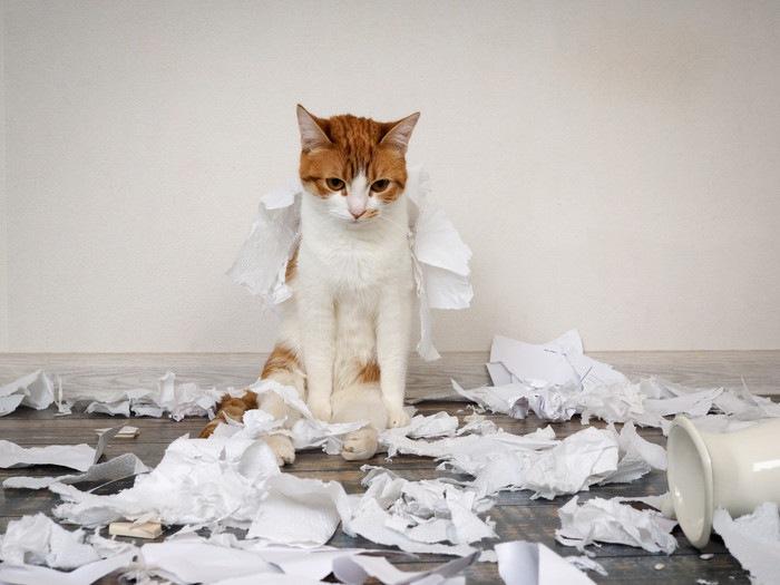 紙を散らかした猫