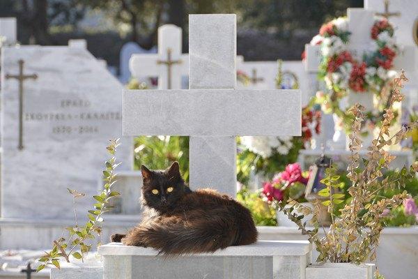 ふさふさの黒猫とお墓