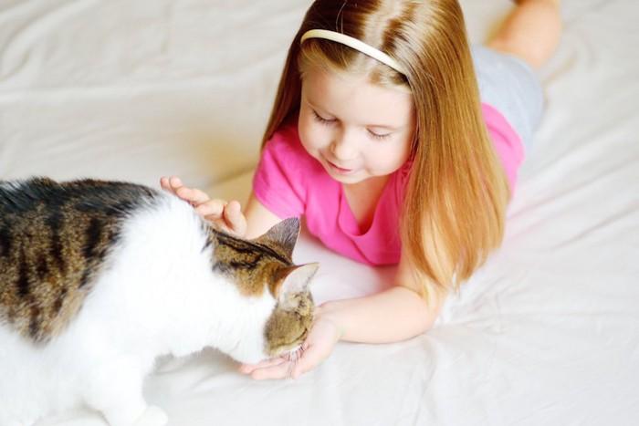 女の子の手からご飯を食べる猫