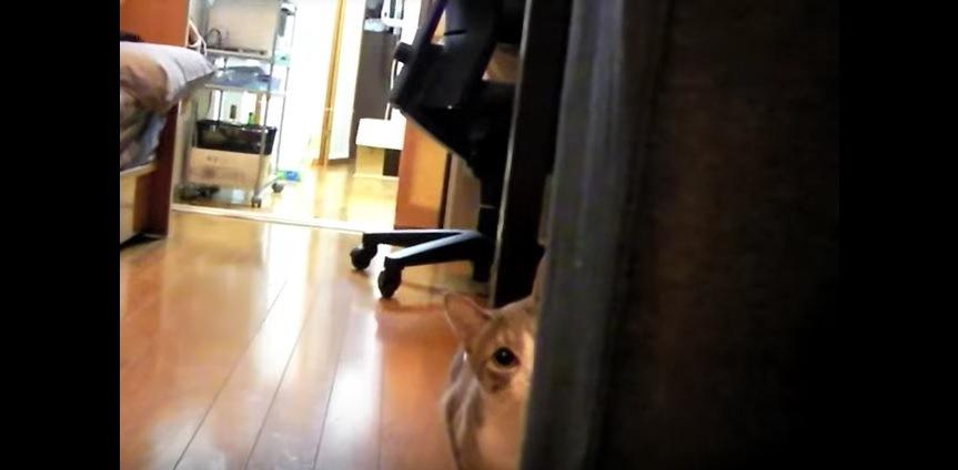 近くにいる猫