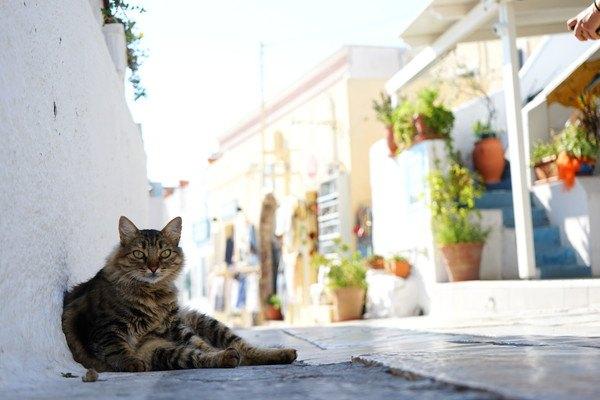 明るい街並みと猫