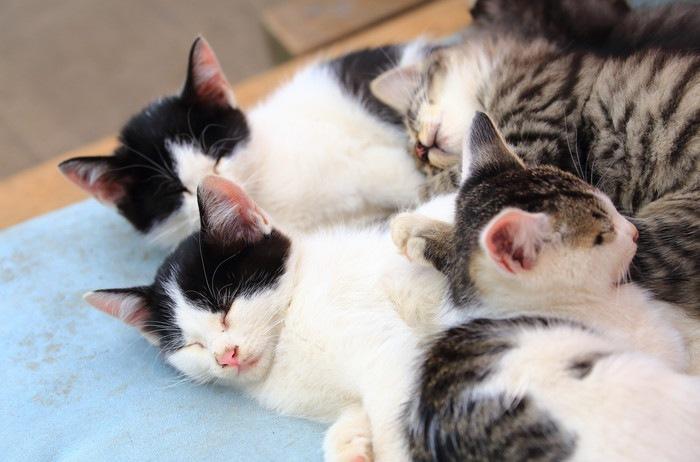 集まって眠る子猫
