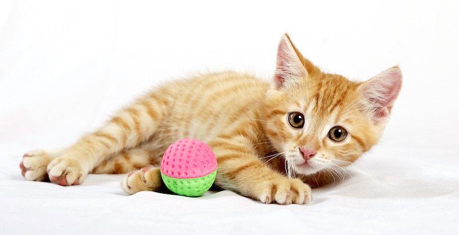 おもちゃのボールと寝転がっている子猫