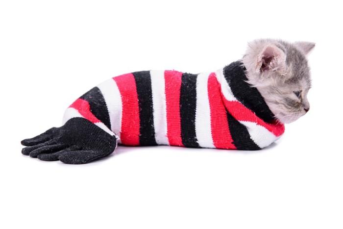 靴下に入る猫