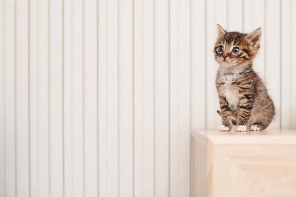 棚の上に乗る子猫