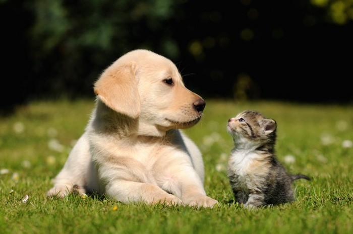 芝生の上で見つめ合う子犬と子猫