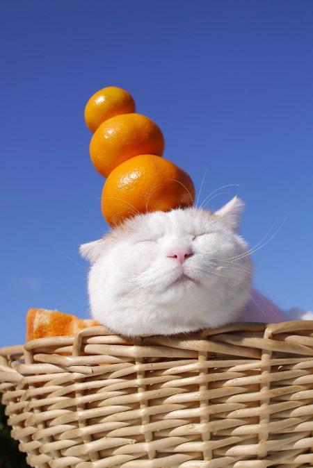 かごのせ猫