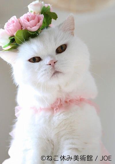 JOE作 美白猫アメリカンポップアートの写真