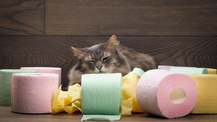 色々な色のトイレットペーパーと猫
