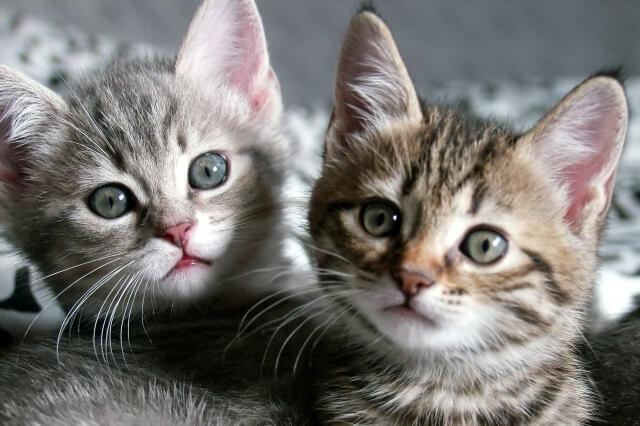 2頭の子猫