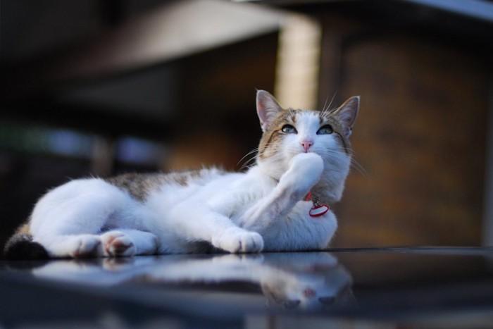 口に手を当てる猫