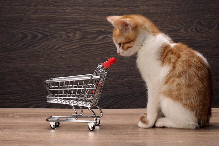 カートを見つめる子猫