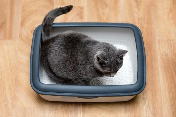 黒っぽい猫がトイレをする