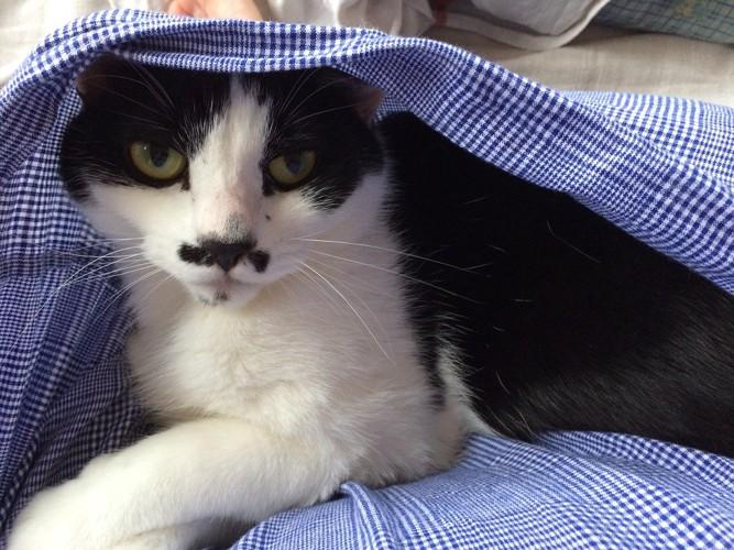 白黒猫全体