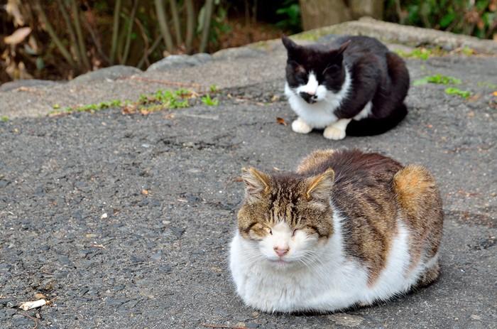 暖をとる二匹の猫