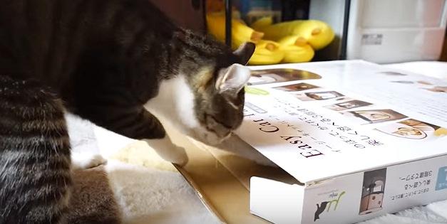 箱の厚みを確認する猫