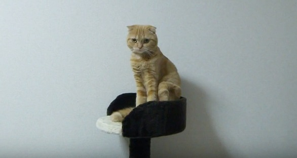 台の上に座る猫