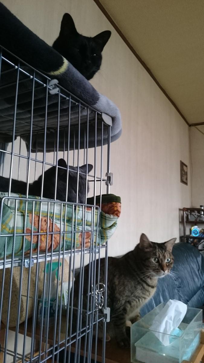 ケージの中と猫3ショット