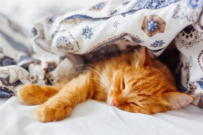 ブランケットの中で眠っている猫