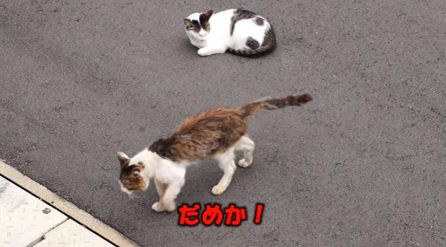 肩を落として歩き去る猫