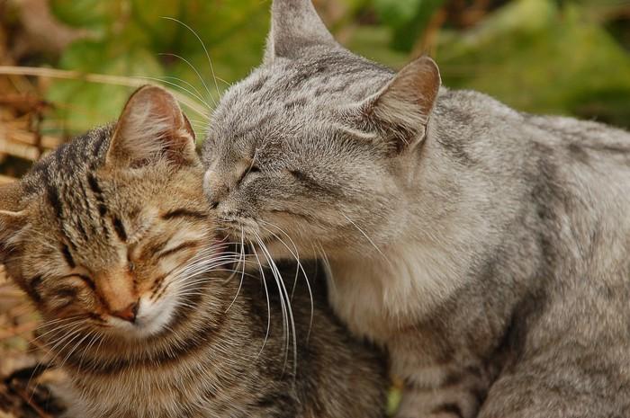 猫の鼻キス