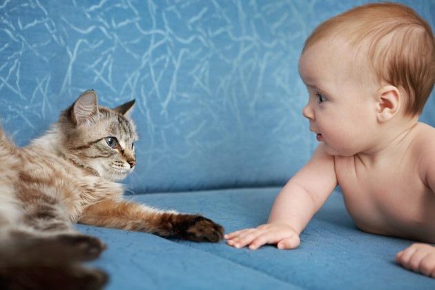人間の赤ちゃんに手を伸ばしている猫