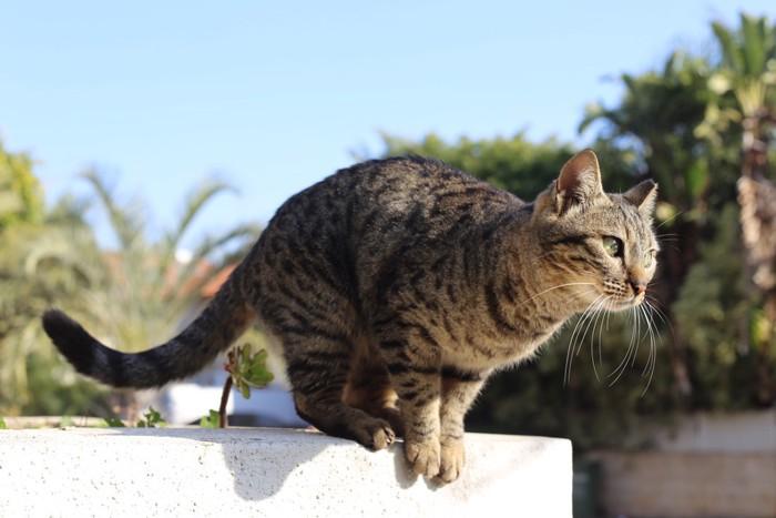 飛ぼうとしている猫